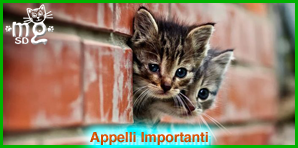 Clicca qui per leggere gli Appelli Importanti!!
